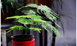 办公室植物布局及注意事项
